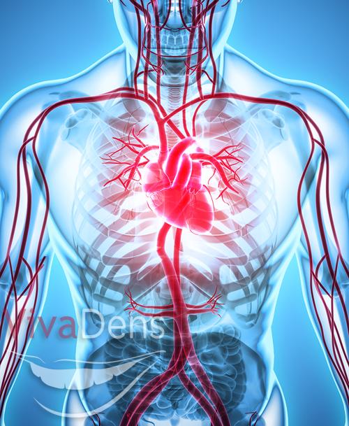 širdies ligos ir periodonto sveikata